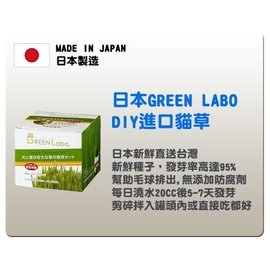 Green Labo ~ DIY 貓草^(燕麥草^)