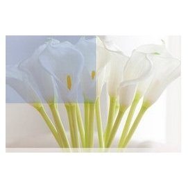 lu PU仿真花馬蹄蓮 高手感大號海芋假花客廳裝飾花 婚慶落地花束花藝