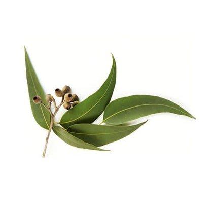 ~露西皂材~藍膠尤加利精油  Eucalyptus Blue Gum  30ML