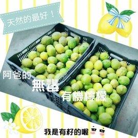 我家阿爸 #x1f468 小農有機檸檬 #x1f34b #x1f69a 自產自銷 #x1f
