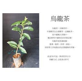 心栽花坊-烏龍茶/茶葉/售價40特價35