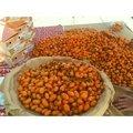 美濃橙蜜香小蕃茄~~自產自銷(小箱5斤)
