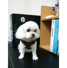 小型犬 ~高檔小型寵物外出背心式彩色圓點胸背牽引繩